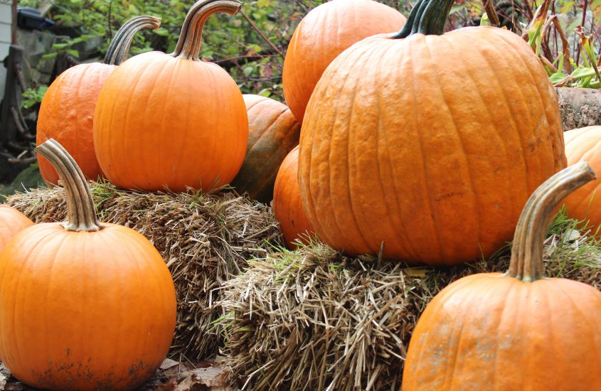 Herbst Lektüre | 7 Bücher, die dir den Herbst versüßen